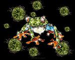 Gem Tree frog